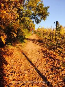 Spaziergang durch die Radebeuler Weinberge