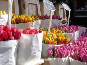 Frühlingsmarkt in Dresden - Wir lieben Dresden